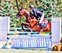 Jumping Horse  University of Findlay Jumping