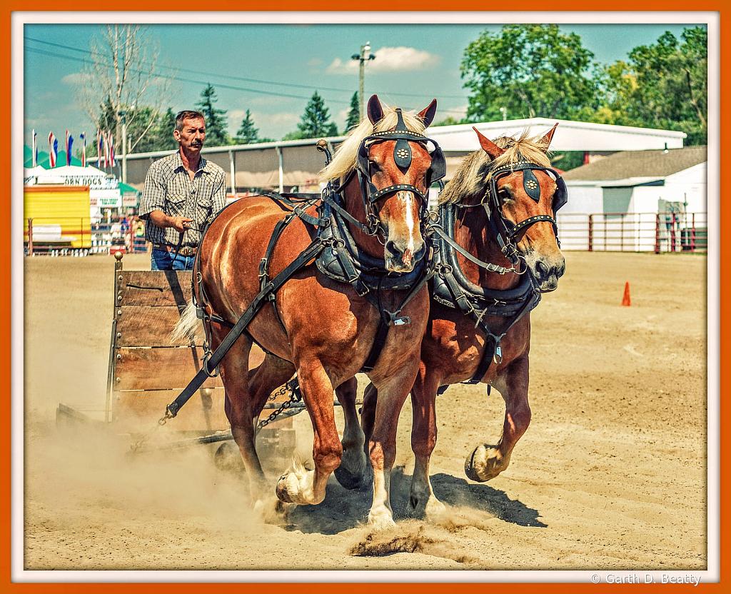Draft Horse - Hancock County Fair