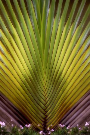 Palm Fan  8375