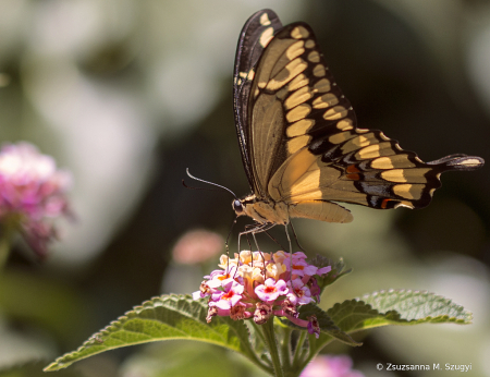 Morning with butterfly