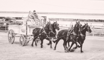Four Horse Hitch in B and W