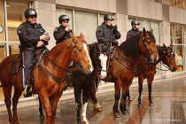 Seattle Mounted Police