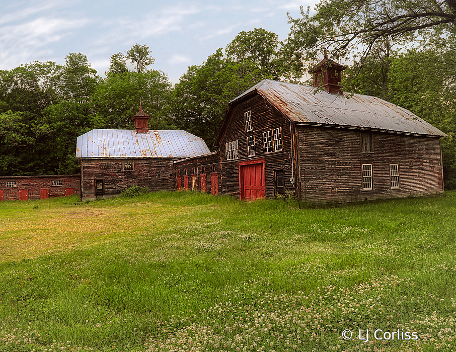 white clover and barns