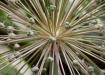 Botanic Solar Sys...