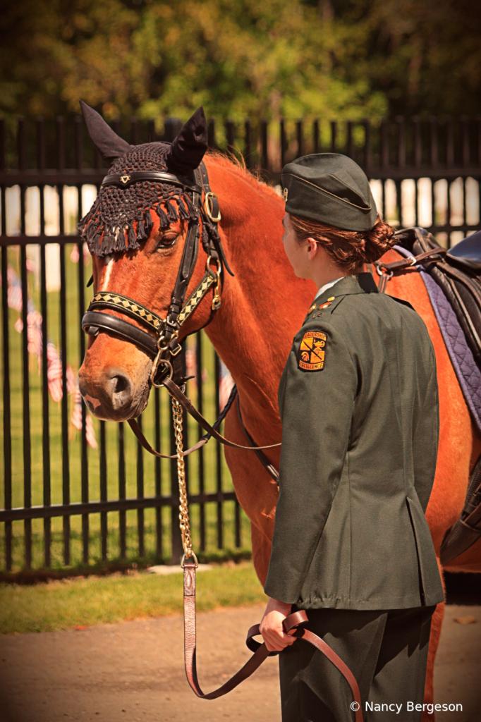 Caparisoned Horse