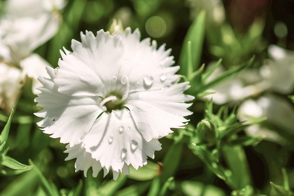 A single bloom, almost tears