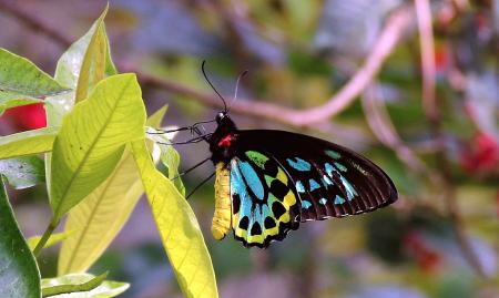 Fairchild Butterfly Garden 1