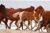 Ponies beach walk