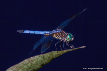 Dragonfly Posing