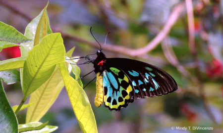 Fairchild Butterfly Garden 1
