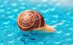 Snail...............