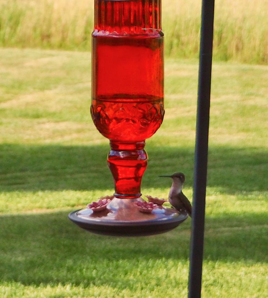 Hummingbird Lands