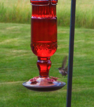Hummingbird departs
