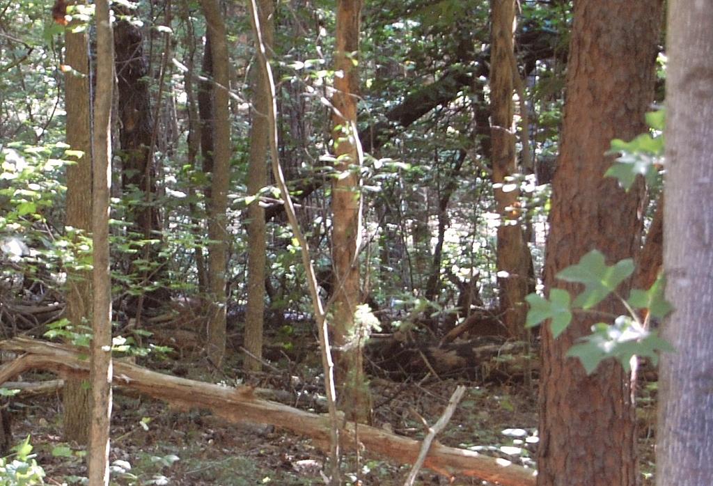 Deer at Rest