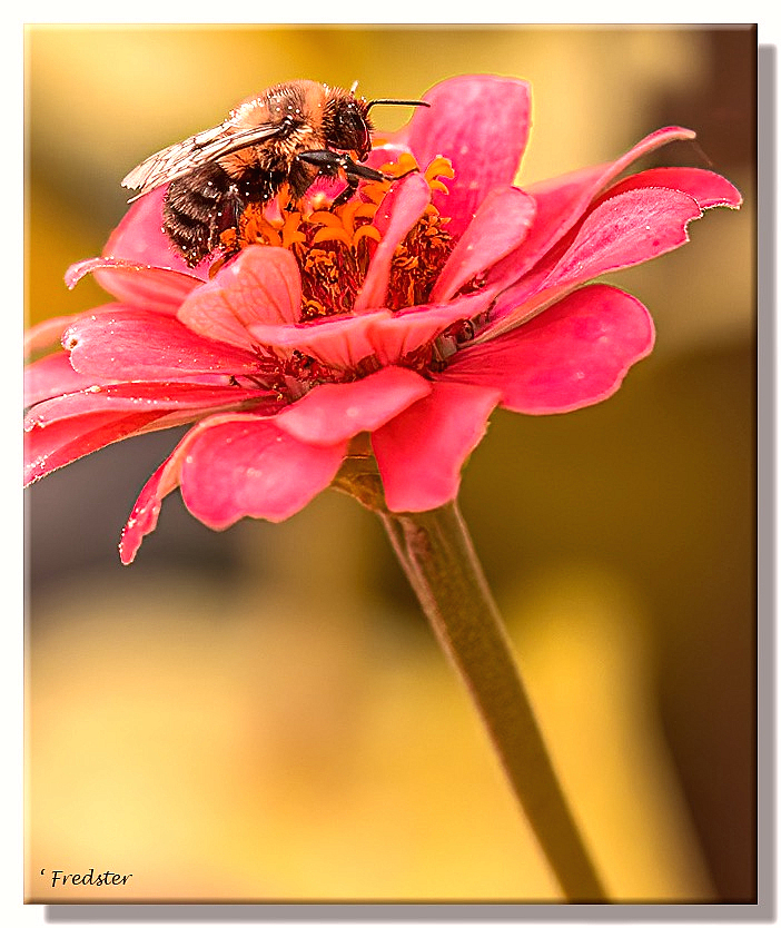 Bee's And Flowers