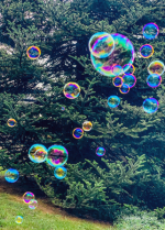 Bubbles in our Yard