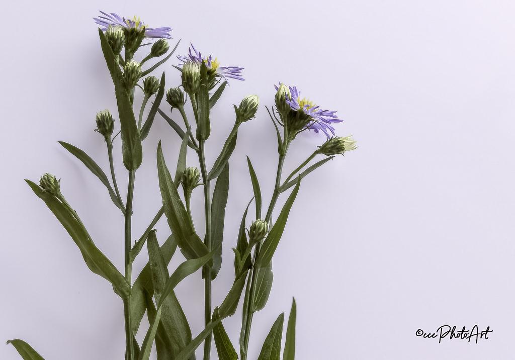 Meadow Magic - ID: 15832137 © Candice C. Calhoun