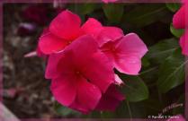 Flower on Boardwalk . . .