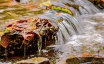 Stream in the Fall