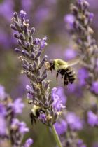 Bee Kind 2  9335