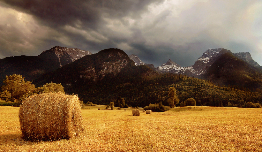 mowed meadow