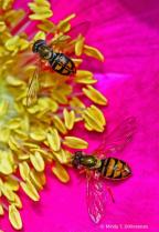 Pollen Partners
