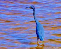 Bluebird Of Happiness ...