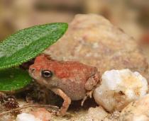 Teeny Toad