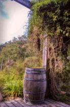 Honey Farm Still Life