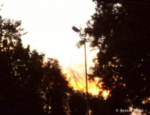 Glow Between The Trees