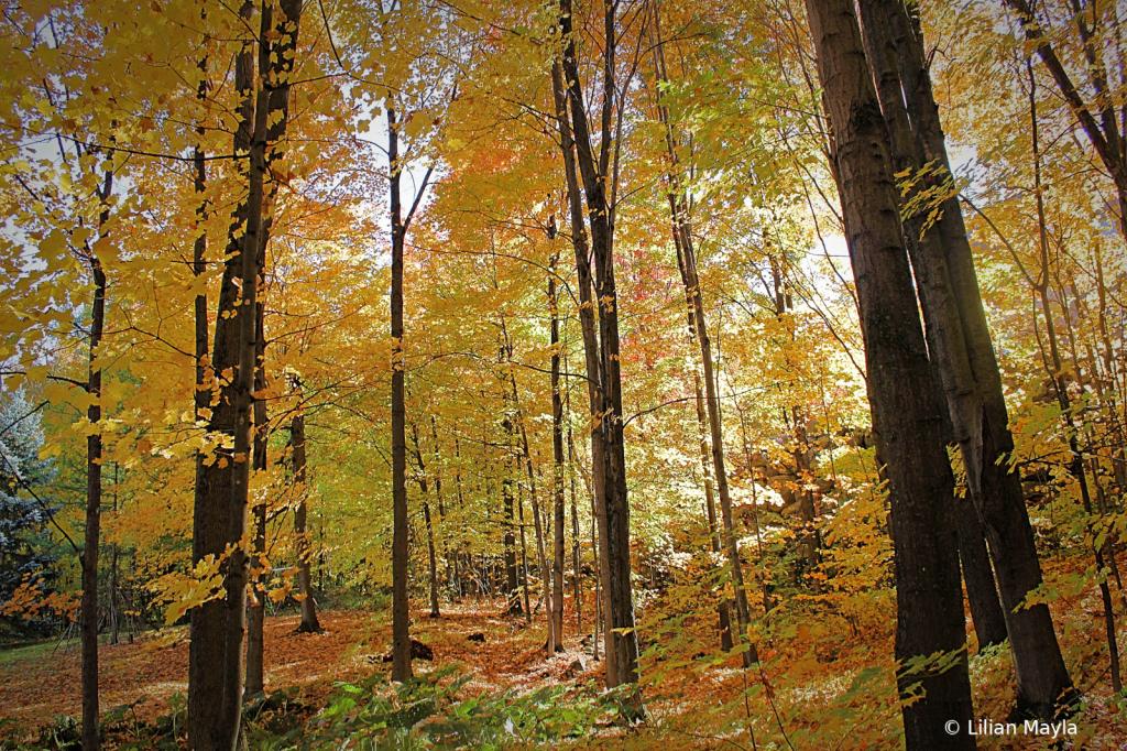 Bromont, Quebec - ID: 15834444 © Nada Mayla