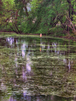 Reflections In A Swampy Area