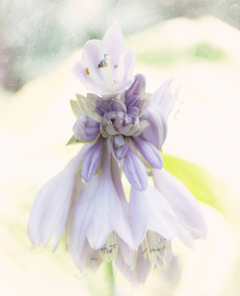 Softly Into Lavender
