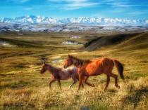 ~ ~ WILD HORSES OF KAZAKHSTAN  ~ ~