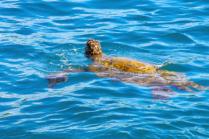 Turtle life!