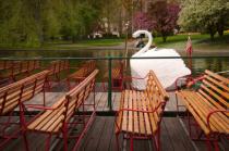 Swan Boats, Boston