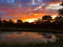 Love Sunrises At The Pond