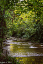 Morning at Cedar Creek