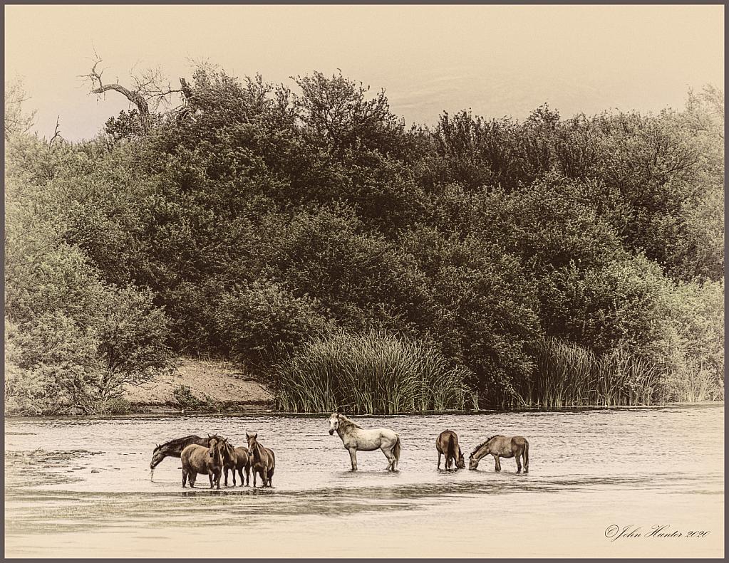 Salt River Horses - ID: 15835327 © John E. Hunter