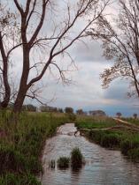 Lark Ave. Creek