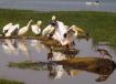 Birds of the Masa...