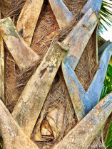 Tropical Texture