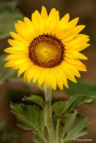 In Full Bloom 7-20-20 275