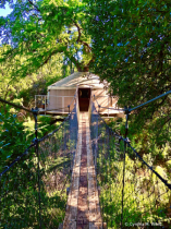 Bridge to Tree House