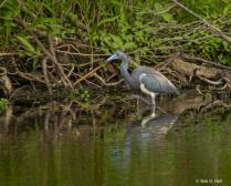 Backwater Wader