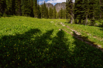 Shadows on Bluebird Trail
