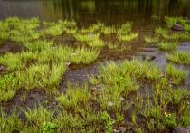 The Grasses of Bluebird Lake