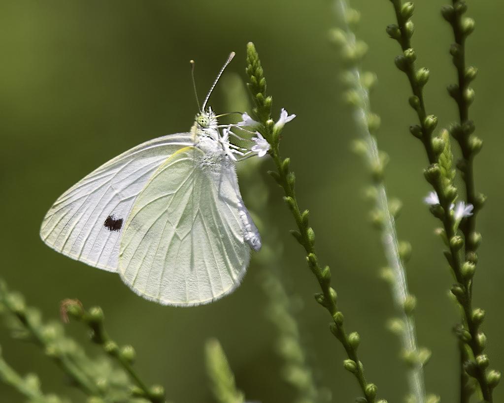 A Tiny Flutter By