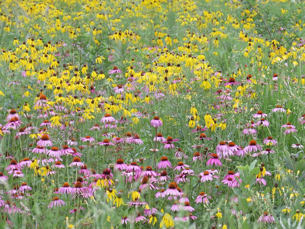 Wildflowers In Winnebago County
