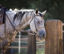 Ranch Horse Nap